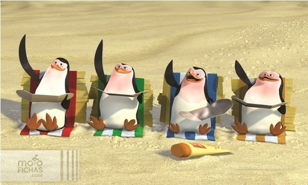 pinguinos 2016 verano