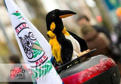 Pingüinos se celebrará finalmente en agosto (image)
